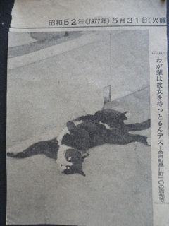 hanajiro.jpg